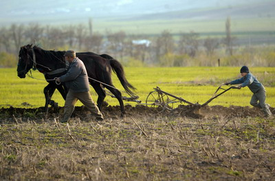 ROMANIA-AGRICULTURE-FEATURE