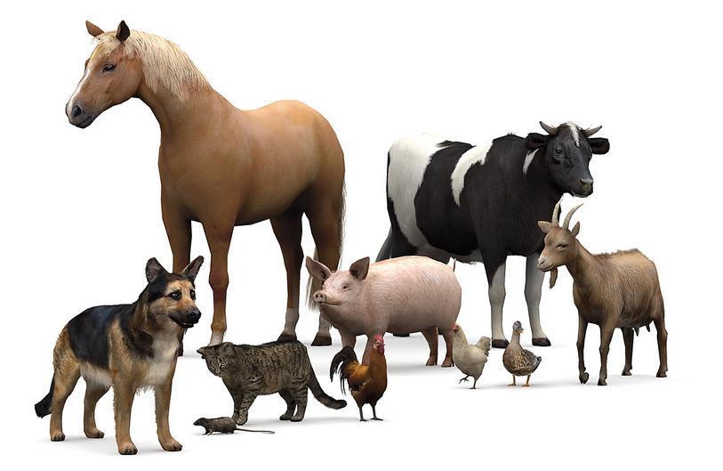 animale-proverbe-si-zicatori2