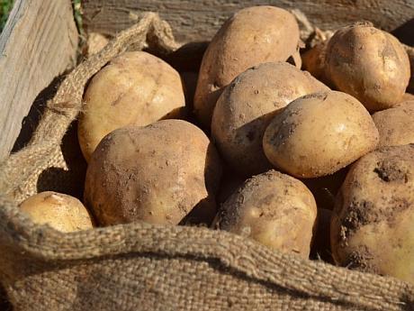 cartofi-de-gradina