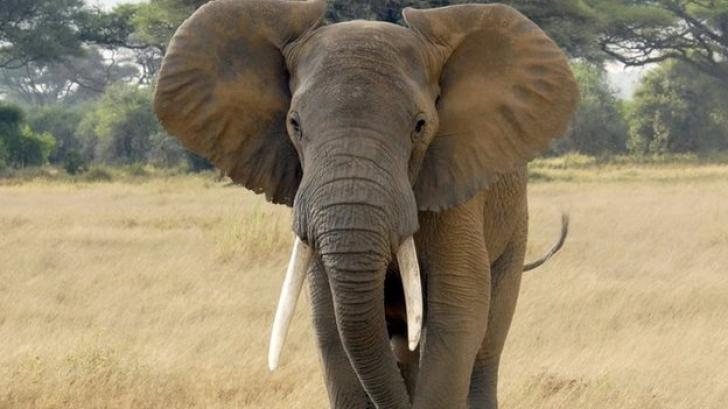 elephant_31502000