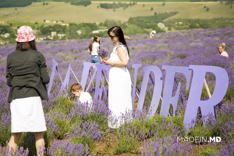 _lavender_fest___97_