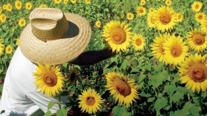 floarea_soareluiafacere123_81662000