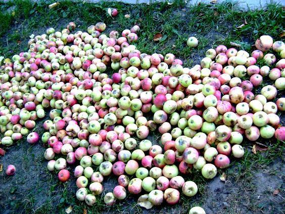 merele-cazute
