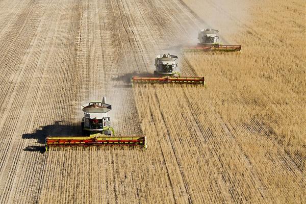 wheat-export