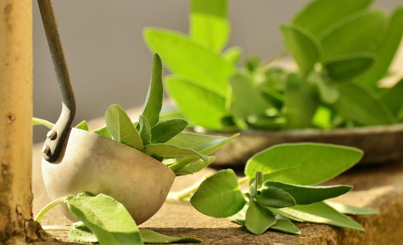 Ceai-verde-sfatulparintilor.ro-pixabay_com-sage-1544883_1920-1400x850