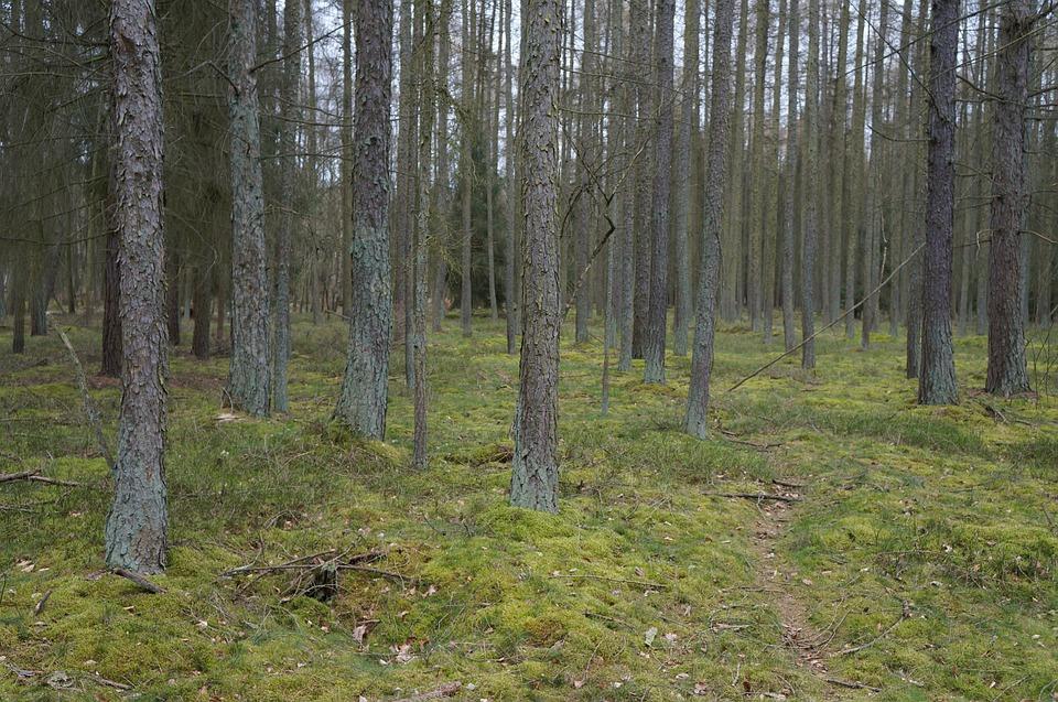 woods-2702225_960_720