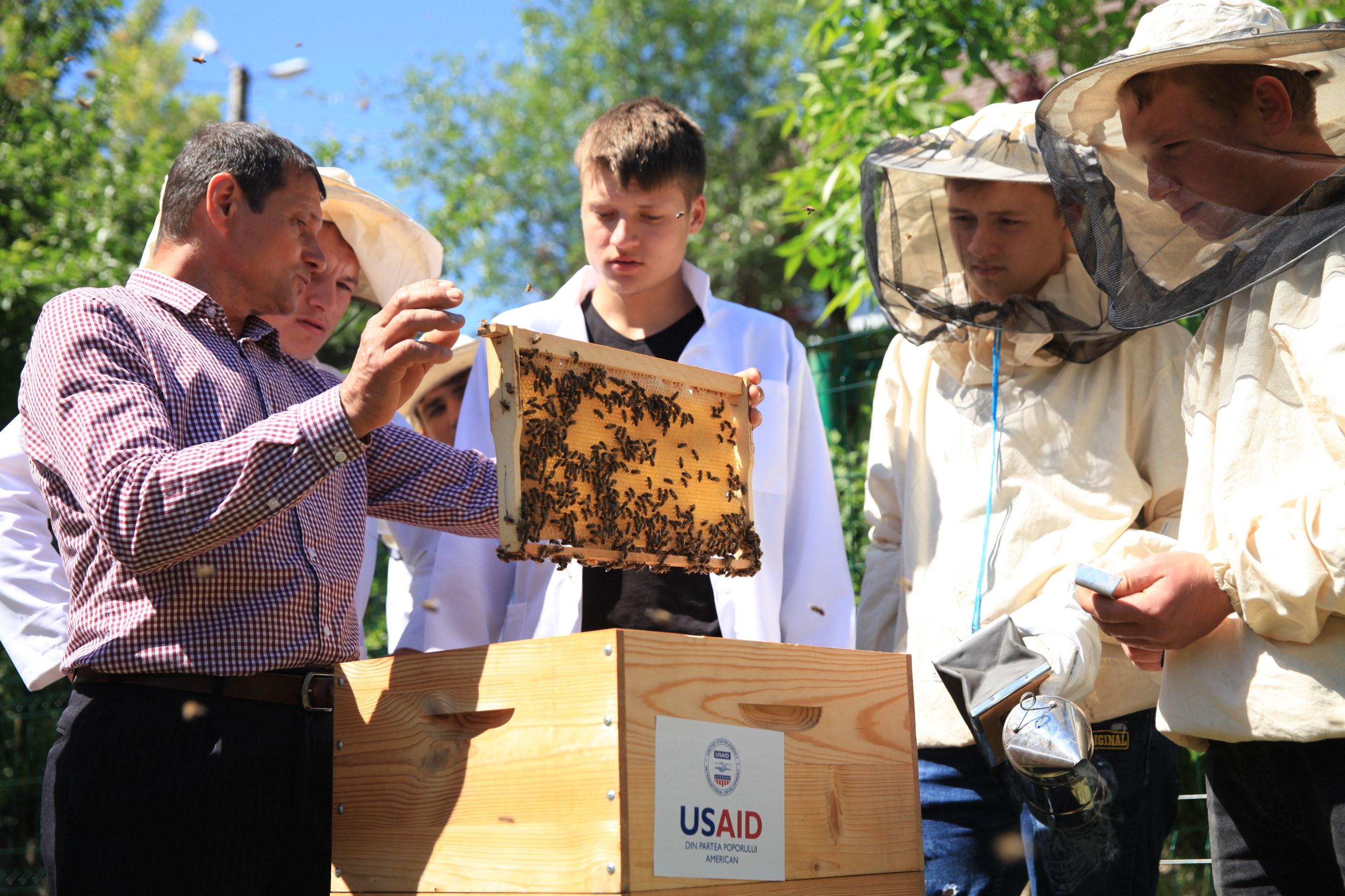 apicultura apm